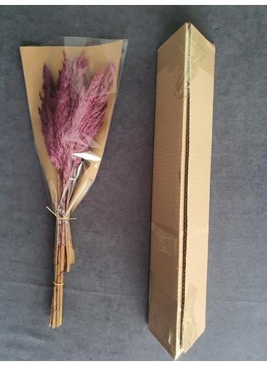 Kuru Çiçek Deposu Kuru Çiçek Şoklanmış 10'Lu Pampas Otu Karışık 60 Cm Pembe